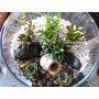 Terrarios - Plantas Suculentas Y Cactus, Regalos Ecológicos