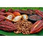 Venta De Cacao En Grano