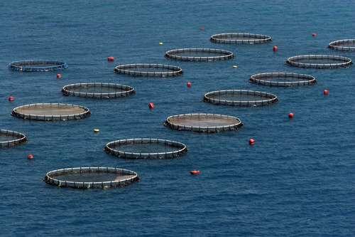 libro construccion de jaulas flotantes piscicultura