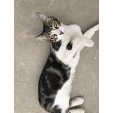 Gatito Macho 6 Meses Súper Cariñoso, En Adopción Res