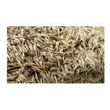 Semillas De Grass Americano