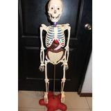 Esqueleto Y Organos Del Cuerpo Humano . Envio Gratis.