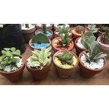Cactus Y Suculentas X Mayor Y Menor, Bautizos ,matimonios.