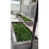 Grass Americano A1