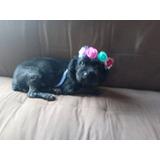 Perritos En Adopción Responsable