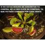 Semillas Plantas Carnivoras En Pack Sellados,calidad Total