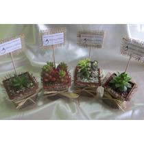 Recuerdos Matrimonio, Ecológicos Plantas Suculentas Y Cactus